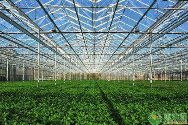 蔬菜温室大棚造价预算有多少